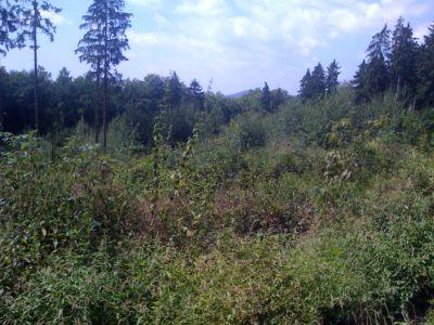 Ein Stück Taunus-Wald